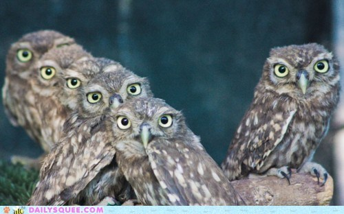 birds branch eyes Hall of Fame looking owls squee stacked watching - 6150031360