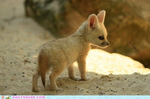 baby big ears ears fennec fennec fox fox Hall of Fame kit squee tiny - 6150044160