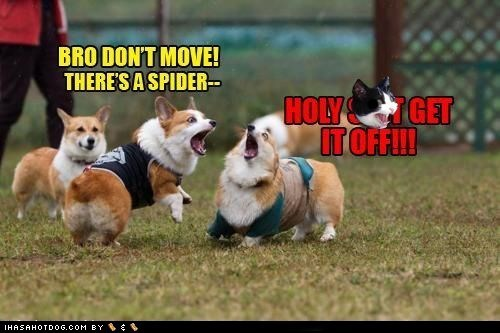 best of the week,corgi,dogs,dont-move,Hall of Fame,spider