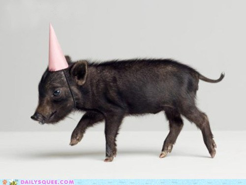 baby,black,hats,parties,party hat,pig,piglet,piglets,squee