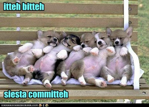 bench corgi nap puppies siesta - 6150204160