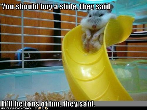 buy,fat,fun,hamster,slide,stuck,They Said