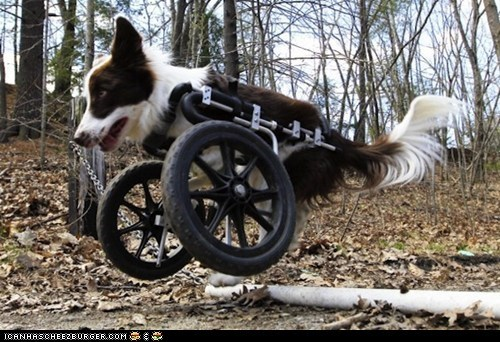 awesome deformity disabled dogs news roosevelt wheelchair win - 6150552320