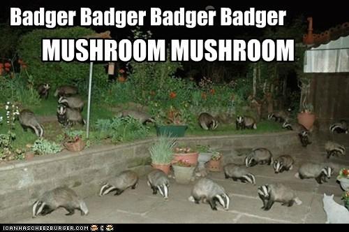 Badger Badger Badger Badger MUSHROOM MUSHROOM