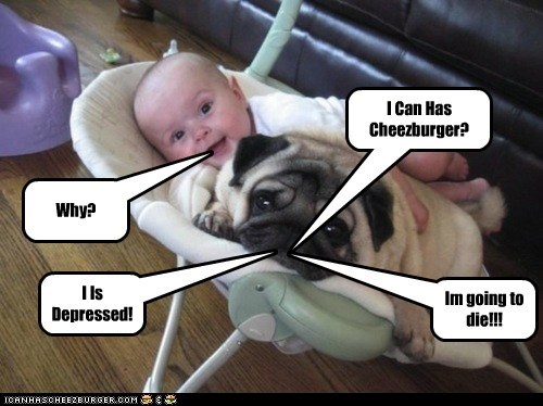 Cheezburger Image 6151866368