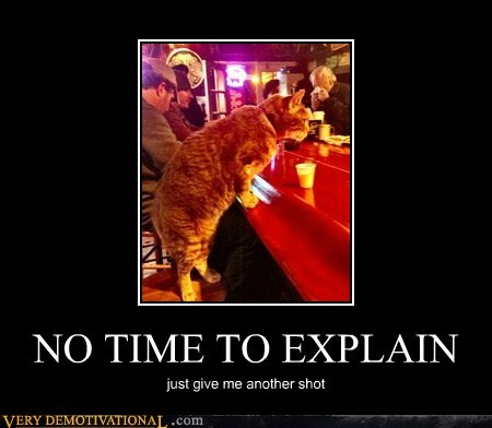 cat explain hilarious shot - 6151866624