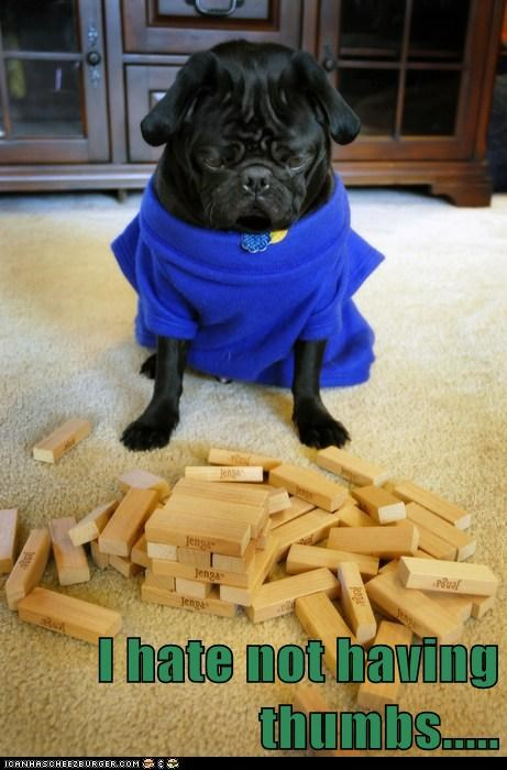 dogs,jenga,pug,thumbs