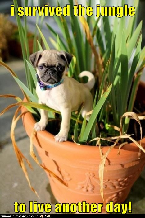 dogs,jungle,plant,planters,plants,pug,pugs,survived