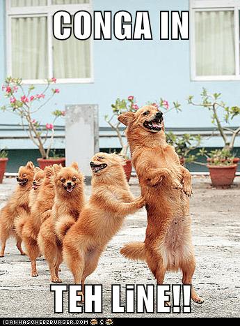conga dance dogs pomeranian - 6152292864