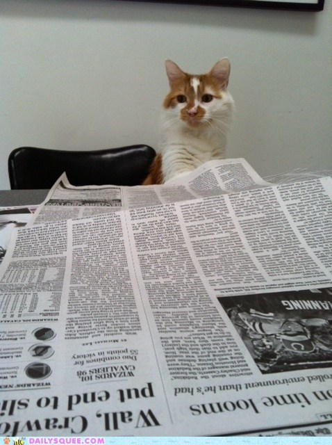 cat hockey newspaper pet reader squees scores sports - 6152434176