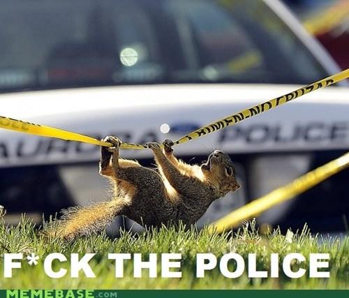 wtf f the police squirrel - 6152719872