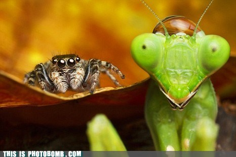 Animal Bomb,animals,cool,gross,praying,praying mantis,spider