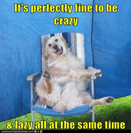 chair chairs crazy dogs golden retriever human-like lazy sitting - 6152919296