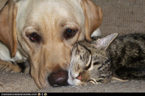 Cats cuddles cuddling cute dogs goggies r owr friends Interspecies Love sleeping - 6153145600