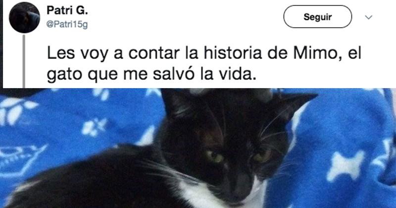 gato salvavidas