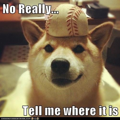 ball baseball dogs shiba inu - 6153437184