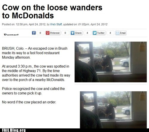 Colorado,cow,drive thru,McDonald's,Probably bad News