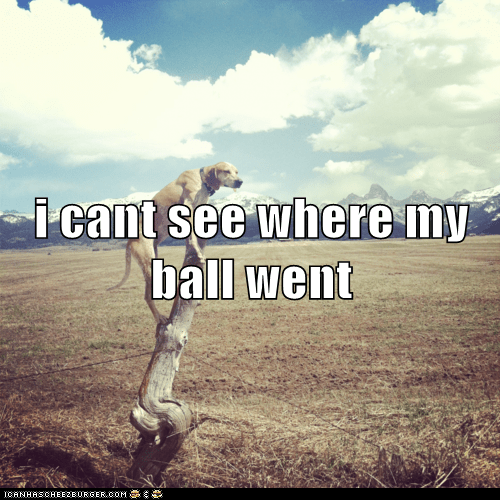 ball,climb,dogs,field,what breed