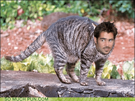 cat,colin,colin farrel,double meaning,feral,homophone,literalism,surname