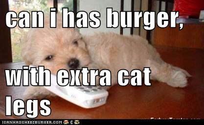 Cheezburger Image 6153969152