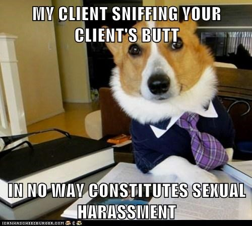 butts,corgis,dogs,laws,Lawyer Dog,Lawyers,Memes,sexual harassment,sniffing butts