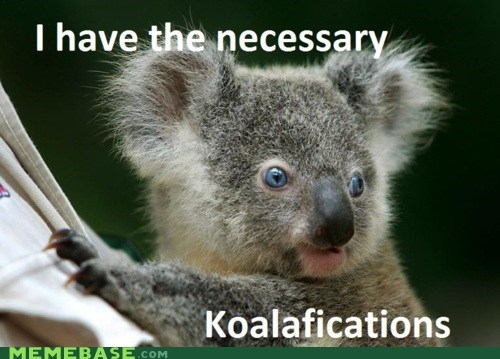 animals koala Memes qualifications - 6154034944