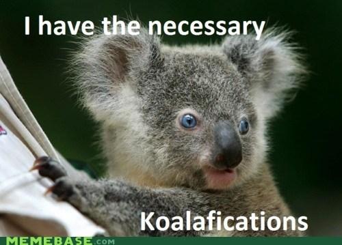 animals koala Memes qualifications - 6154034944