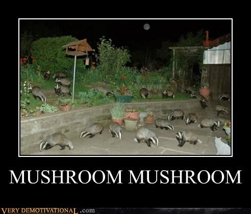 badger badger hilarious mushroom mushroom wtf - 6154135040