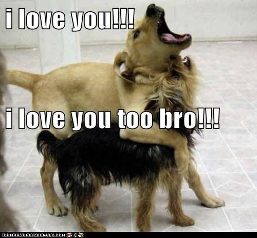 bro dogs love what breed