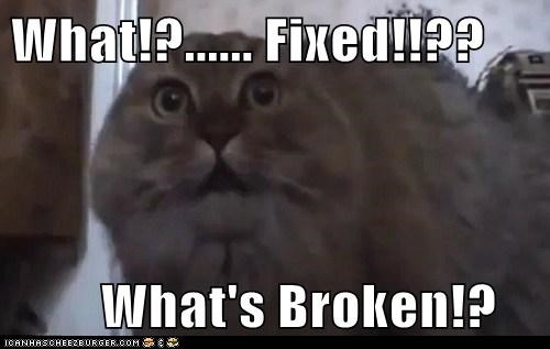 broken,confused,fixed,neuter,scared,shock,vet