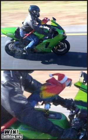 driving motorcycle parrot what - 6154221056