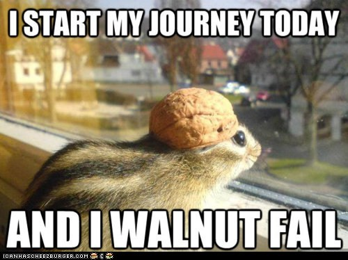 adventure adventure chipmunk chipmunks hats Memes puns walnut walnuts - 6154482944