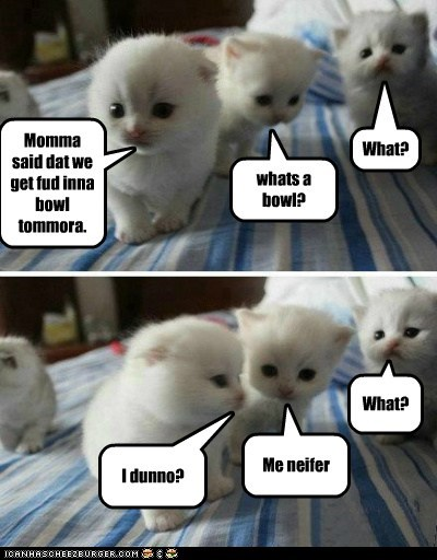 baby Cats dont-understand dumb english Hall of Fame kitten knowledge language young