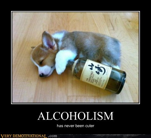 alcoholism corgi cute hilarious puppy - 6155224320