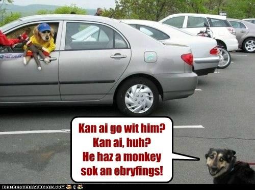 dogs fun seems legit sock monkey - 6155720704