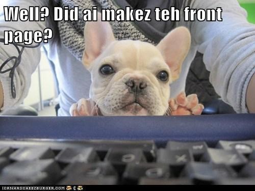 computer dogs french bulldogs front page - 6155784192