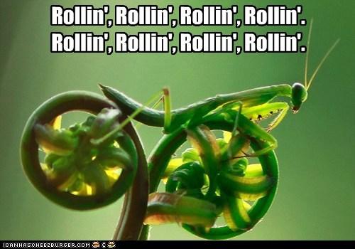 Rollin', Rollin', Rollin', Rollin'. Rollin', Rollin', Rollin', Rollin'.