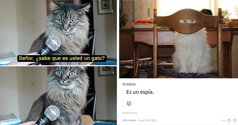 chistes felinos