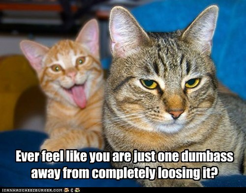 annoying best of the week Cats crazy dumb dumbass Hall of Fame insane loose it nuts photobomb snap two cats