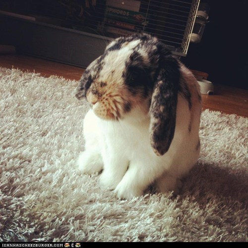 bunny floppy happy bunday Sad - 6156882688