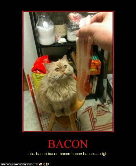 BACON oh.. bacon bacon bacon bacon bacon..... sigh