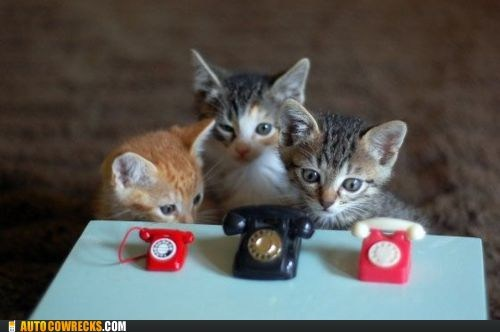 Cats,lolcats,phones
