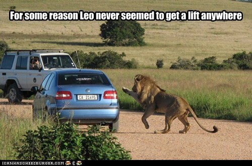 cars,hitchhiking,lift,lion,ride,scared
