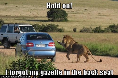 back seat,flagging,forgot,gazelle,hold on,lion,taxi,wait