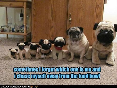 Cheezburger Image 6157382400