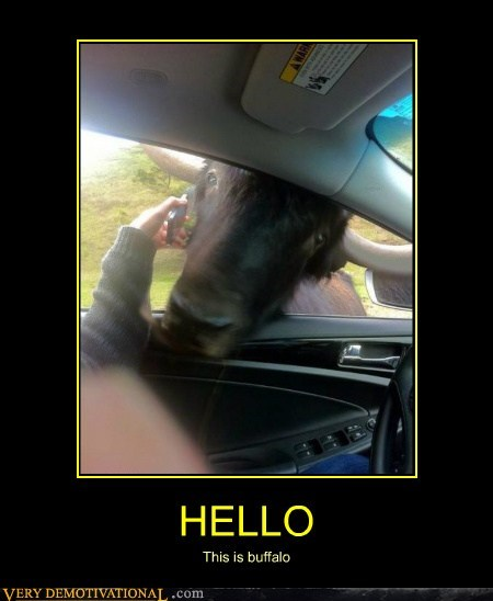 animals buffalo hello hilarious phone wtf - 6157414656