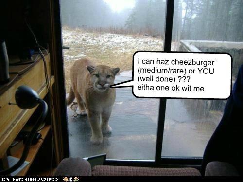 Cheezburger Image 6157613056