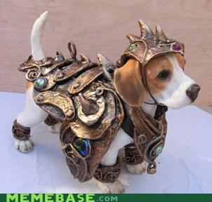 armor cosplay cute dogs