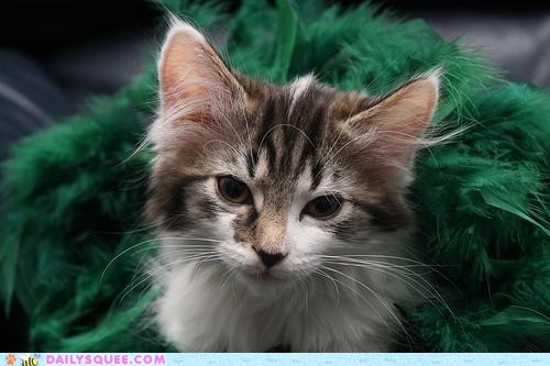 boa,cat,costume,dressup,fancy,feathers,kitten,pets,reader squees
