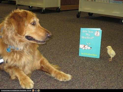 are you my mother birds books chicks dogs IRL - 6157898752